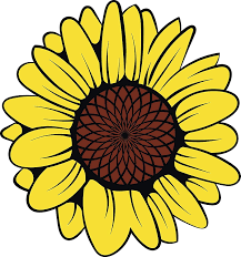 Amazon Com Ew Designs Simple Pretty Yellow Sunflower Cartoon Vinyl Decal Bumper Sticker 12 Tall Kitchen Dining