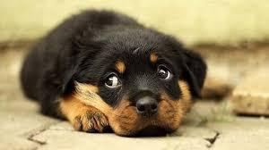 Se reveló el misterio que hace a los perros lucir enternecedores ...