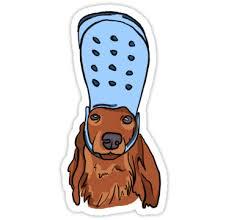 Pin On Wiener Dog