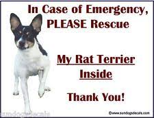 Rat Terrier In Case Of Emergency Rescue My Rat Terrier Window Decal Sticker Rat Terriers Terrier Rescue