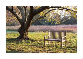 5×7 Photo Card: Bench at Polly HIll – Barbara Reynolds Photography