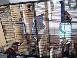 owning a chinchilla your chinchillas cage