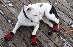 11 diy dog bootie plans homemade paw