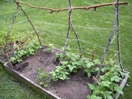 7 Green Bean Trellis Ideas Backyard Growers
