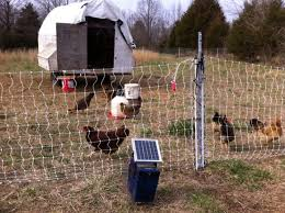 The Great Chicken Exodus Tubby Creek Farm