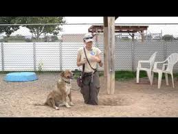 Help How Do I Stop My Dog From Digging Holes Caninejournal Com