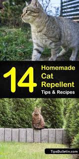 14 natural cat repellent recipes anyone
