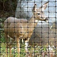 How To Build A Deer Fence In 7 Easy Steps A M Leonard Inc