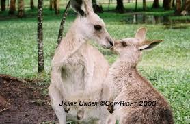 I miss the Kangaroos from Ada Ryan Gardens :'( :'( - Home | Facebook