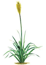 Yellow Flower Wall Decal Grass Wall Decals Safari Wall Decals