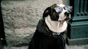 50 free hd wallpapers funny dogs on