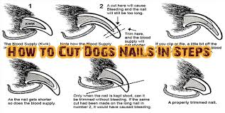 how to cut dogs nails in steps dogs