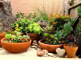 container gardening selecting the