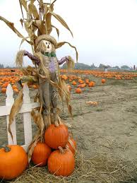 Pumpkin Scarecrow Scarecrow Along A Picket Fence In A Pumpkin Patch Ad Picket Scarecrow Pumpkin Patch Pumpkin Ad Pumpkin A Pumpkin Patches