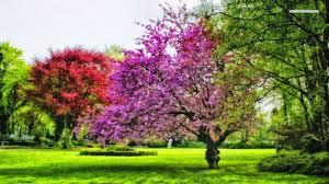 Bộ sưu tập những hình ảnh thiên nhiên về mùa xuân lãng mạn và thơ ...