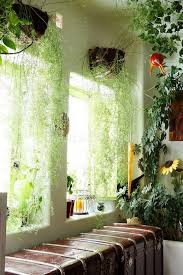 hanging plant curtains room with