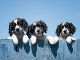 How To Dog Proof Your Fence Realestate Com Au