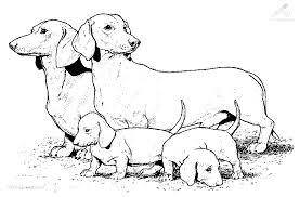 Kleurplaat Dieren Hond Hond En Puppies