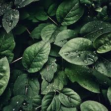 Nature | Adam Bowman