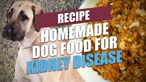 homemade dog food for kidney disease
