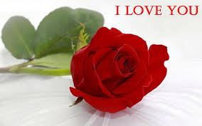 red rose wallpapers for love