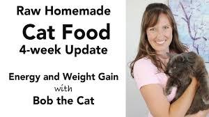 homemade cat food update kidney