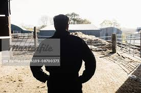 Rear View Of Silhouette Man Standing With Hand On Hip In Barn Stock Photo Masterfile Premium Royalty Free Code 6109 08700373