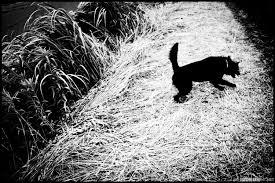 """Hajime Kimura: """"Man and dog""""-PHOTOINTER"""