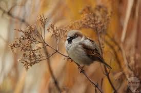 خلفيات عصافير