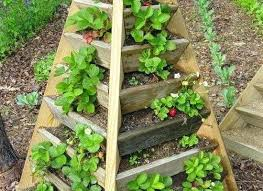 grow strawberries vertically