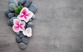 flower orchid stones spa zen