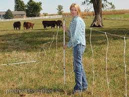 Select The Best Electric Fence Design For Your Cattle Premier1supplies
