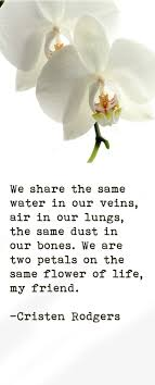 best quotes about wisdom we are two pedals on the same flower
