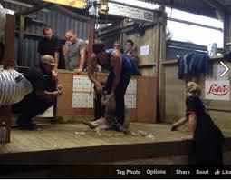 Irish shearer Scott sets new lamb shearing record of 867 in nine ...