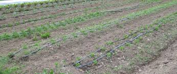drip irrigation with low pressure water