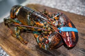 Live Lobster Delivery - The Fresh ...