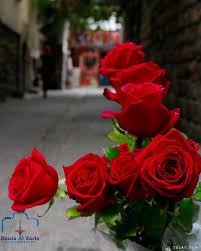 صور ورد جوري بتدرجات ألوانه الحمراء ورد احمر للحبيب باقات ورود