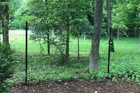 A Complete Guide To Deer Fencing Red Fox Fence Gates New York Connecticut