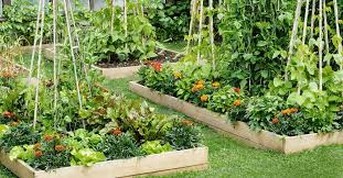 all about raised bed gardens this old