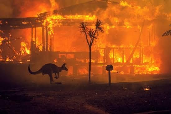 """Resultado de imagem para imagens de incêndio na austrália obriga pessoas a abandonar suas casas"""""""