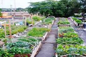 solidaria garden