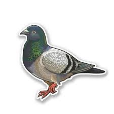 13cm X 9cm Pigeon Vinyl Decal Laptop Car Motorbike Carrier Bird Car Sticker For Truck Van Vehicle Glass Window Decals Wish