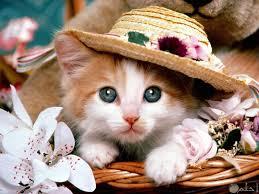 صور قطط و حيوانات كيوت و اجمل خلفيات Hd