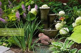 planted with hosta white hydrangea