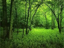 خلفية خضراء اجمل خلفيات خضراء من الطبيعه هل تعلم