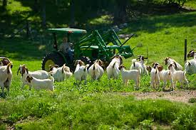 Goat Fencing Tractor Supply Co