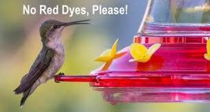 hummingbird food recipe make your own