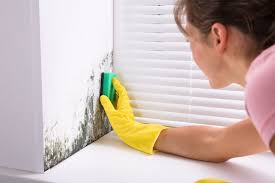 get rid of mold from every home surface