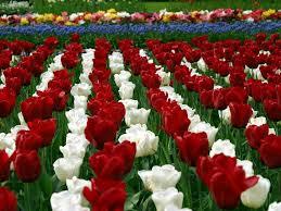 اجمل الصور للورود والازهار احلى بنات