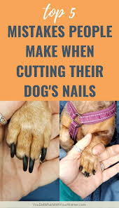cutting their dog s nails
